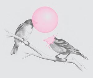 bird, black and white, and goma de mascar image