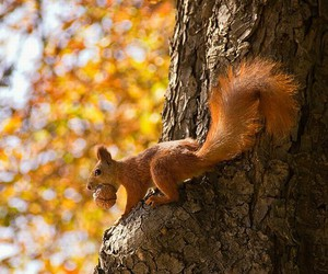 animals, nut, and fall image