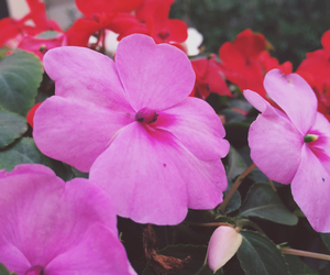 flores, nature, and flowers image