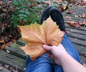 autumn, pale grunge, and leaf image
