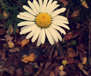 beautiful, flower, and hipster image
