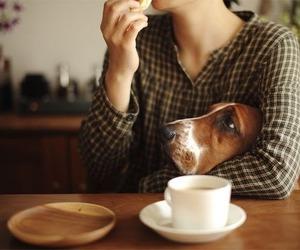 dog and coffee image