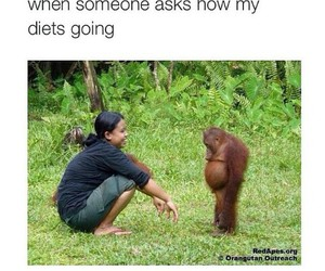 funny, diet, and monkey image