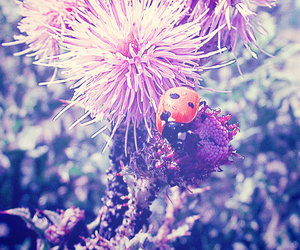 colourful, girly, and insect image