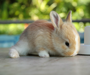 bunny, adoreable, and cute image