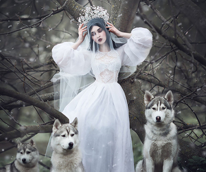 wolf, forest, and fantasy image