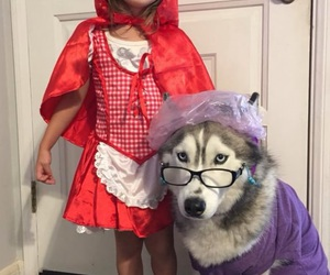 wolf, Halloween, and dog image