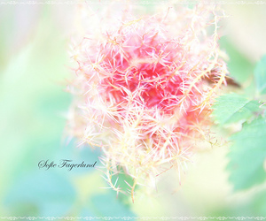 flower, green, and pink image