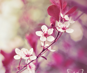 flowers, blossom, and vintage image