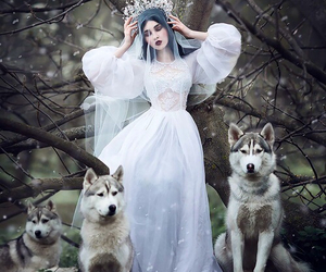 wolf, fantasy, and forest image