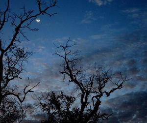 tree, like, and moon image