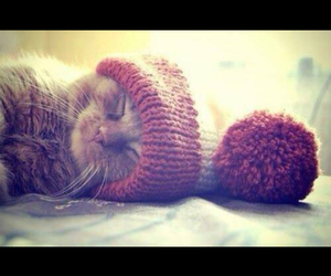 cat, hat, and cute image