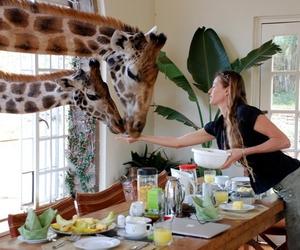 giraffe, animal, and food image