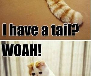 cat, funny, and tail image