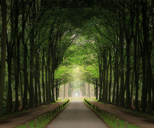 trees and green image