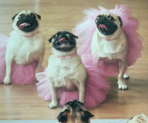 dog, pug, and ballet image