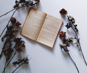 beautiful, books, and lovely image