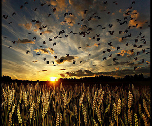 amazing, birds, and clouds image