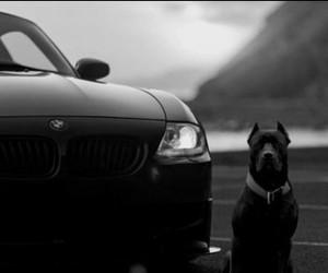 dog, bm, and bmw image