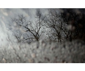 day, trees, and photography image