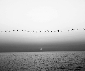birds, black, and sunset image