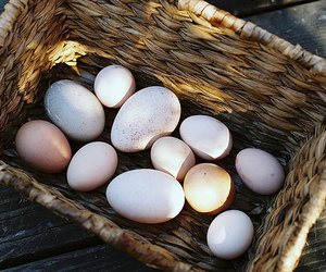 egg, eggs, and vintage image
