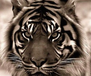 animal, eyes, and aggressive image