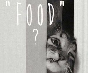 black and white, cat, and food image