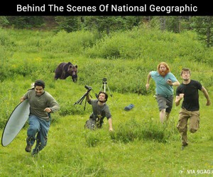 funny, national geographic, and lol image