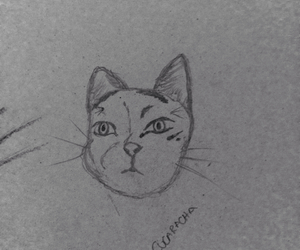 arte, cat, and Majo image