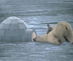 Polar Bear, bear, and white image