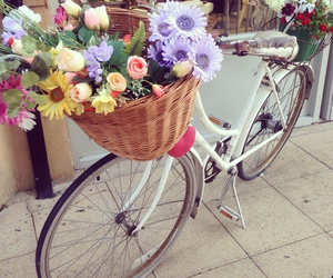 basket, flowers, and bicycle image
