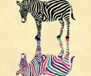 zebra, colors, and animal image