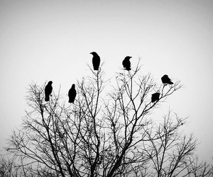 birds, crows, and tree image
