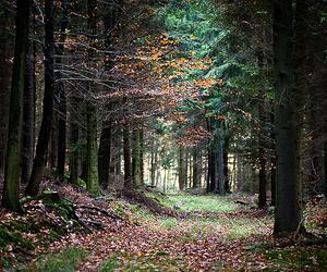 enchanted, green, and trees image