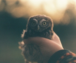 owl, vintage, and nature image