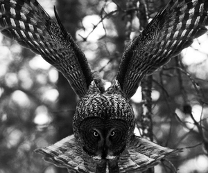 bird, nature, and owl image