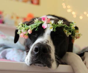 dog and flowercrown image