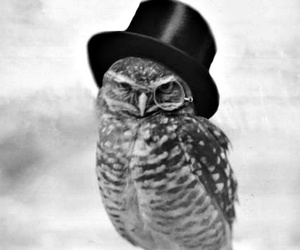 hat, fab, and grey image