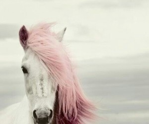 horse, pink, and white image