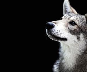 beautiful, pretty, and animals image