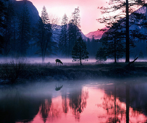 nature, tree, and deer image