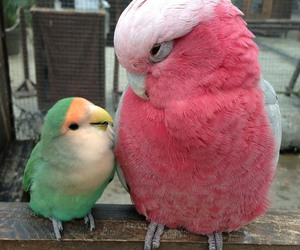 animals, birds, and parrots image