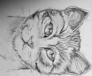 cat, crayon, and draw image
