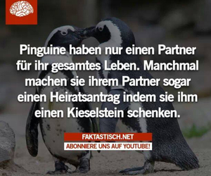 pinguin, sweet, and fakt image