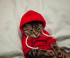 cat, cute, and red image