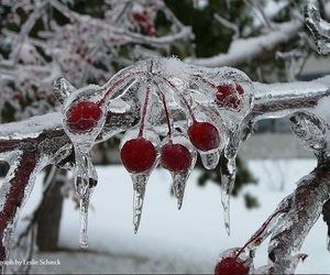 cherry, ice, and snow image
