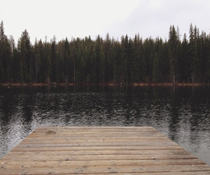 forest, nature, and water image