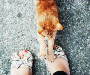 cat, cute, and feet image