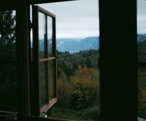 nature, photography, and window image
